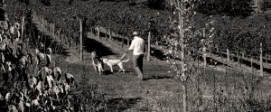 dogs-allowed-sepia