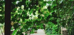 wines=event-caledar